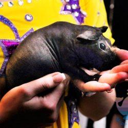 Шоу Дрессированных Животных для детей и взрослых