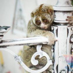 Шоу Дрессированных Животных в отеле, доме отдыха