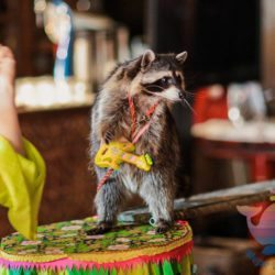 Шоу Дрессированных Животных на корпоратив, тимбилдинг