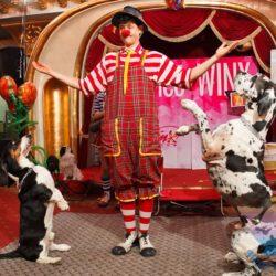 Шоу Дрессированных Животных на день рождения
